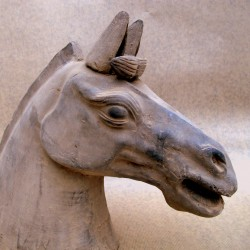 Terracota horse head