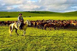 Chevaux dans la prairie de Bashang